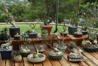 Botanic Wonders